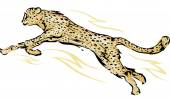 Cheetah in the Middle of a Leap — Stock Photo