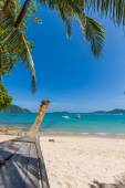 Palm tree on Bangtao beach. Thailand.  — Foto de Stock