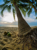 Coconut on the beach in Thailand — Stock Photo