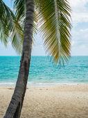 Tropical beach of Koh Samui island — ストック写真