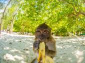 Monkey on Poda beach in Krabi  — Stock Photo