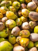 Coconuts at the coconut farm — Stockfoto