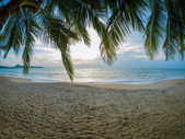 Coconut tree on the beach in Koh Samui  — Stock Photo