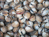 Freshwater clams mix  — Stock Photo