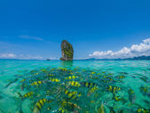 Fish in the clear azure water, Poda beach — Stock Photo