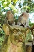 バリ島ウブドのサル — ストック写真