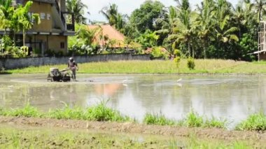 Rice paddy cultivation — Stock Video