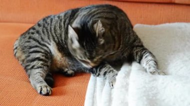 Cat grooming — Stock Video