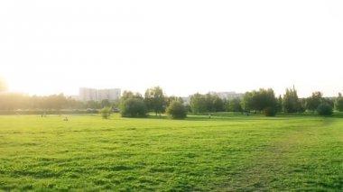 Sunshine in beautiful park — Stock Video