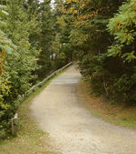 Gravel path in woods — Stock Photo