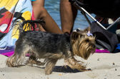 Dog on beach — Stock Photo