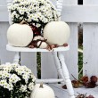 White Pumpkins and Mums — Stock Photo #53866971