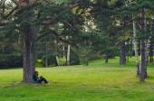 Teenage girl sitting under the tree and reading book — Stock Photo