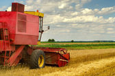 Harvester combine harvesting wheat on cloudy summer day — Stock Photo