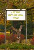 Let the nature heal you - billboard sign in front of the autumn — Stock Photo
