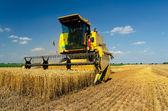 Harvester combine harvesting wheat on sunny summer day — Stock Photo