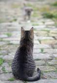 Cat watching the small puppy approaching her — Stock Photo