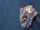 Butterfly on a Plants in a Garden — Fotografia Stock