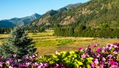 Mountain View with Flowers — Stock Photo