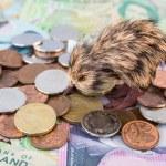 New Zealand Money — Stock Photo #76409941