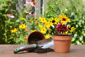 Gardeners table with flowers — Stock Photo