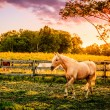 Palomino horses — Stock Photo #51956117