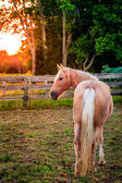 Horse by the fence at sunset — Stock Photo