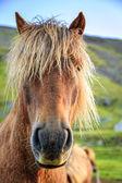Pony grazing on farm — Stock Photo