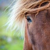 Pony on a farm — Stock Photo