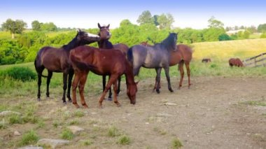 Group of horses on farm — Stock Video