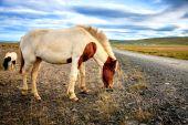 Pony on remote gravel road — Stock Photo