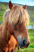 Pony on farm — Stock Photo