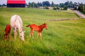 Mother horse wit two colts — ストック写真