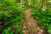 Rugged trail in Red River Gorge — Stock Photo