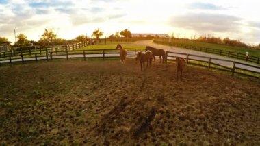 Bluegrass horse farm — ストックビデオ