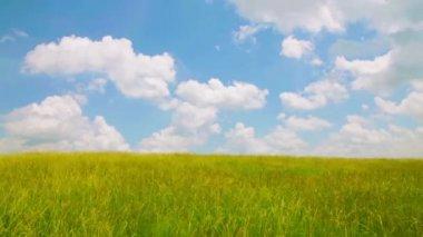 風は、草フィールド以上 — ストックビデオ