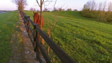 栗の馬は柵のそばに立っています。 — ストックビデオ