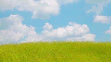 Vind över gräsplan — Stockvideo
