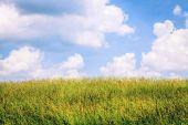 Ensolarado céu azul sobre um campo — Fotografia Stock