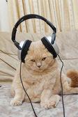 Cute kitten and headphones — Stock Photo