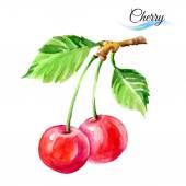 Cherries drawing watercolor — Vector de stock