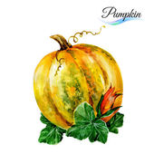 Watercolor pumpkin  on white — Stock Vector