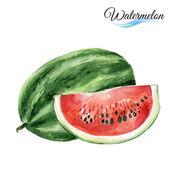Watercolor watermelon on white — Stock Vector