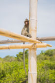 Monkey on the bamboo stick. — Stock Photo