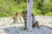 Monkey on the shore. — Stock Photo