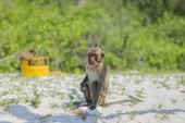 Monkey on the shore. — Stock Photo