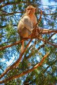 Ağaç maymunu — Stok fotoğraf