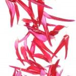 Постер, плакат: Falling petals of dahlia