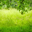 Green grass. Shallow depth of field. — Stock Photo #65976767