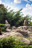 Group of prairie dogs — Stockfoto